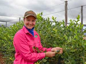 Farmer's not blue about career path