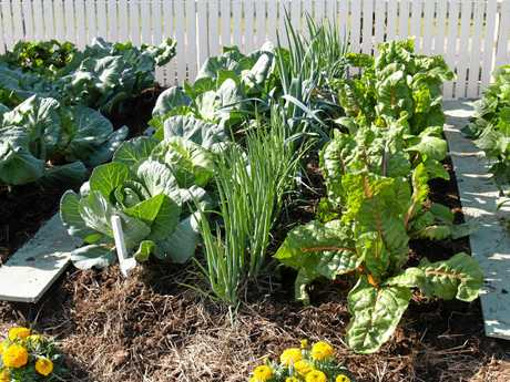 When starting a vegie patch the way you prepare the soil you have will help. The inclusion of organic matter in your vegetable garden soil will help retain soil moisture, allowing water to penetrate and the roots to go deep into the soil.