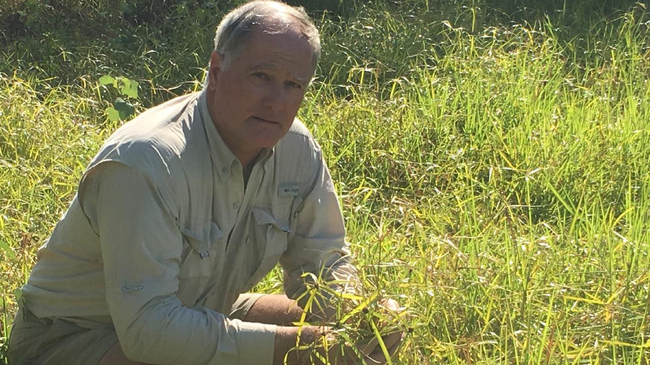 Ingham farmer Chris Bosworth. PIC: Morganne Kopittke
