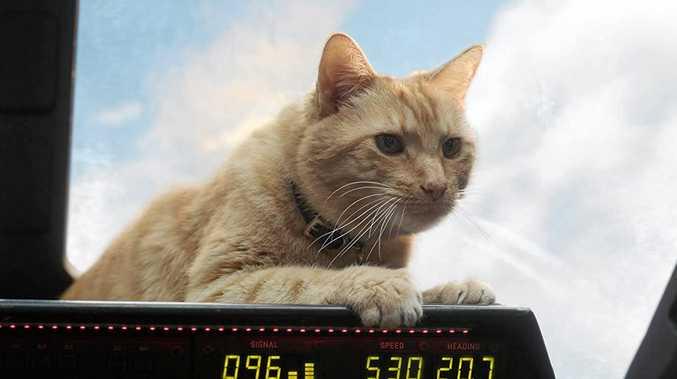FURREAL: Captain Marvel features an interesting feline.
