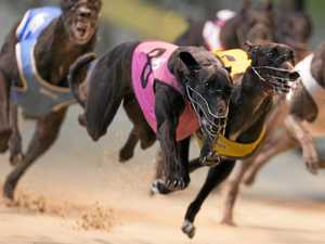 Lismore greyhounds cancelled as owners chase big bucks