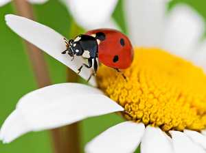 Encourage insects to be your garden helpers