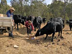 Farmers go to desperate measures to save their cattle