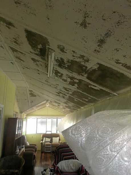 AFTERMATH: Some of the mould found in the houses after the 2019 Townsville floods.