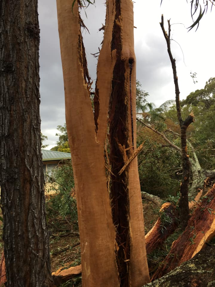 Sharon Lahey-Bradley shared this photo of a tree at her home following the storm on March 14.