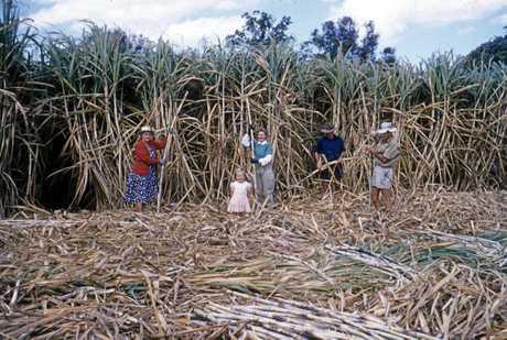 Garrett family members stripping cane on their cane farm at Bli Bli in August 1958.