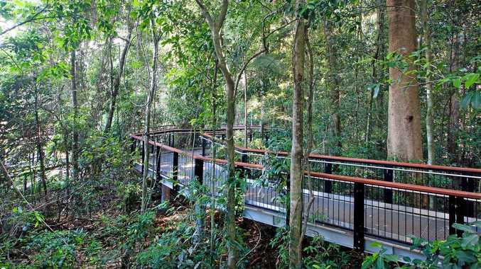 SPECIES-RICH ENVIRONMENT: A Bioblitz will be held at Mary Cairncross Scenic Reserve at Maleny.