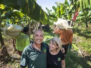 How farmer uses wasps, ants to protect Reef