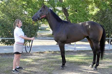 Grafton horse owner Fleur Henley with Country Championships contender Rakhish.