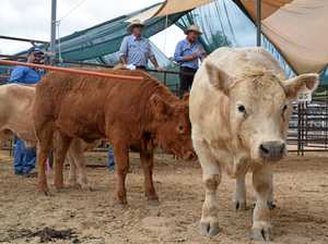30 year low for Warwick Show prime cattle numbers