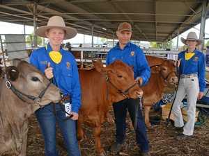 School cattle team starry-eyed with Jupiter