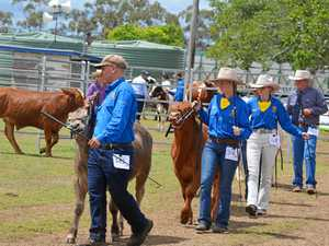 Murgon Show cattle showing