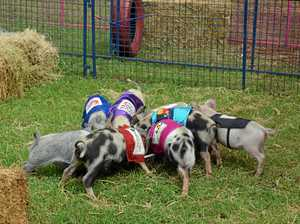 Sandy Creek Pig Day Out 2019