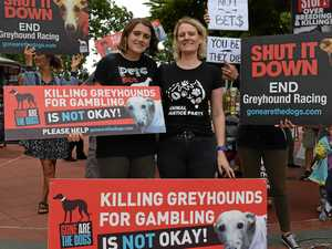 Greyhound activists want end to racing