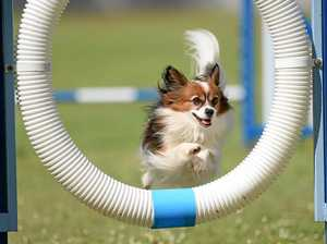 Dog Sport Competition