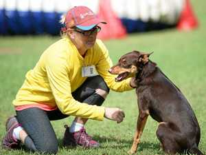 Dog trials heat up in North Rocky