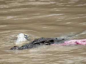 Croc and croc and croc on croc