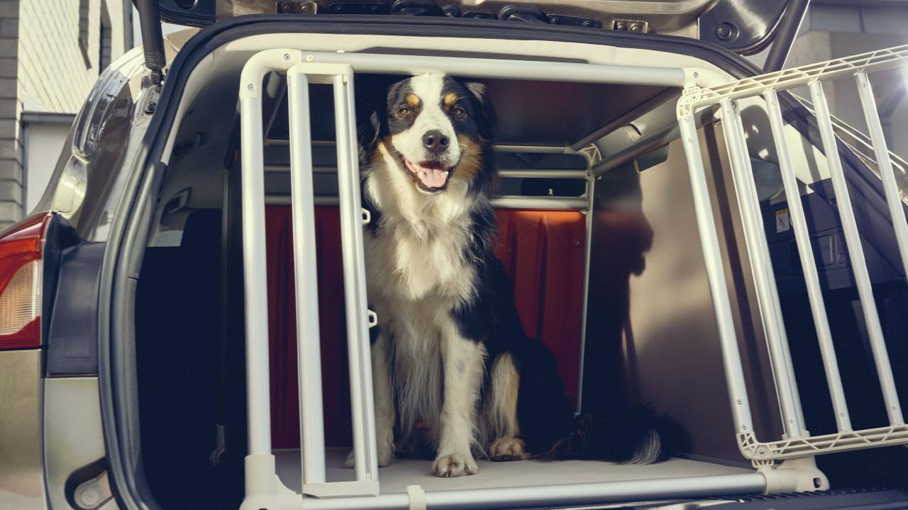 A reader is finding it hard to get a vehicle big enough to fit their two pooches.