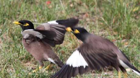 The controversial birds.