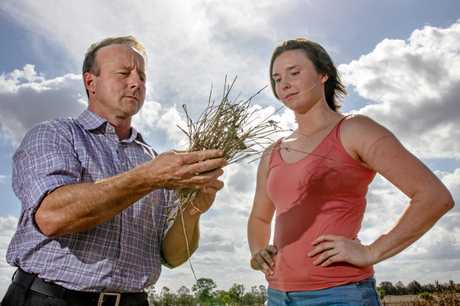 University of Queensland's Dr Anthony Young and Melody Thomson are researching pasture dieback, hoping to identify the cause of the condition.