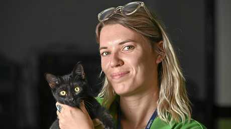 HELPING HANDS: The RSPCA are desperately seeking more volunteers at their shelters. Tessa Van de Sandt, volunteer coordinator with Khandi the domestic short hair.