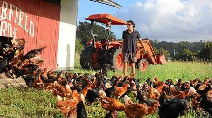 BRIGHT FUTURE: With the community's help, Mullumbimby student Oliver Bora 's 450 hens have arrived for his ethical free-range egg farm venture at Shearwater Steiner School.