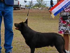 TOP DOGS: See Murgon Show's prize-winning pooches
