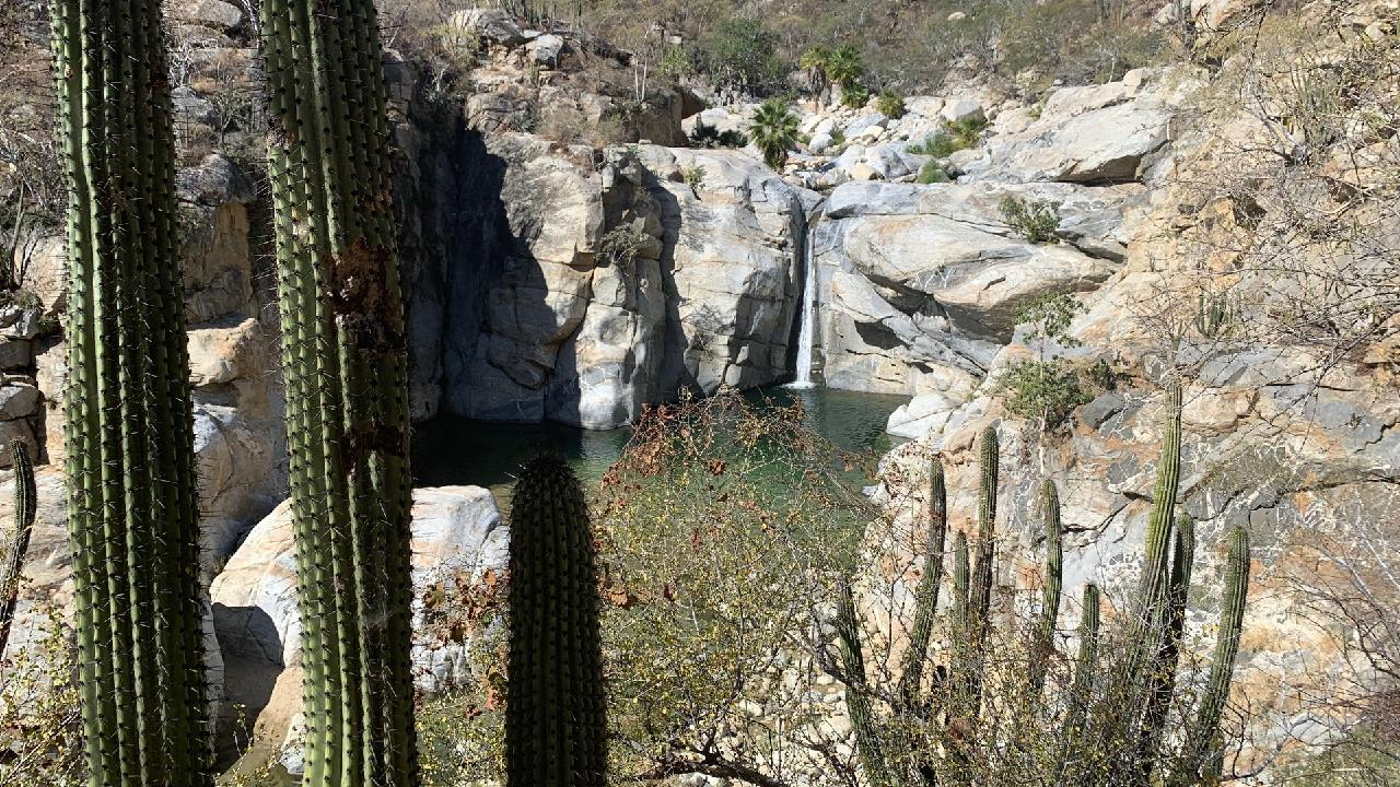 My skin started to turn in to a mosquitoes perfect meal as we walked towards the natural springs in the Fox Canyon, about an hour off the coast from Cabos.