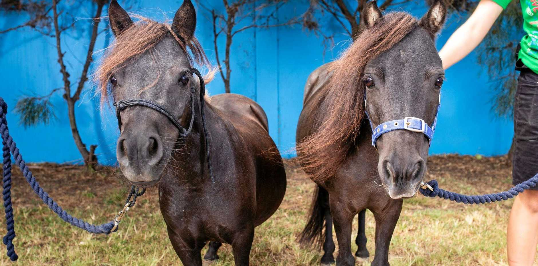 HELP US: The RSPCA is urgently looking for horse foster carers.