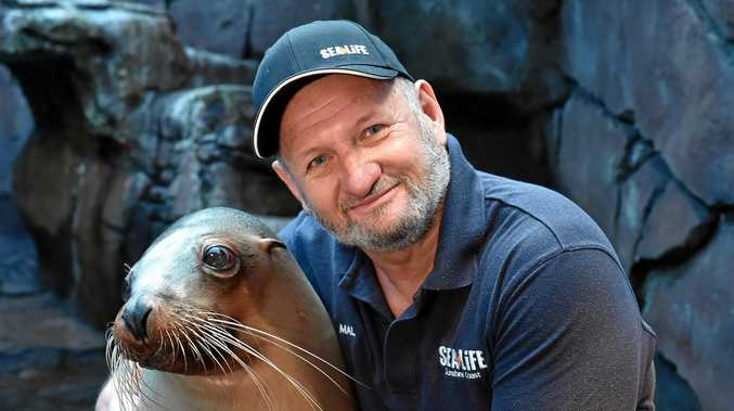 Longest standing employee Malcolm Westwood od Sea Life Sunshine Coast is retiring this month. A hug goodbye with Teiko the seal.