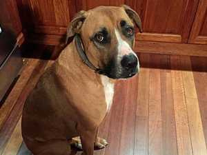 Death row dog's disappearing act has owner in strife
