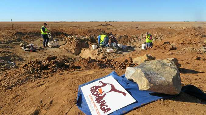 BIG DIG: The excavation of giant sauropod Monty at Plevna Downs near Eromanga will restart in May, after he was unearthed a few years ago.