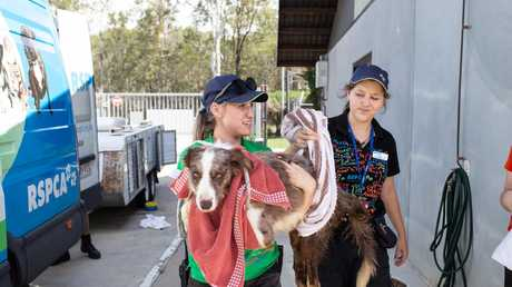RSPCA officers raid a so-called animal rescue farm in Brisbane's north. Picture: RSPCA/Facebook