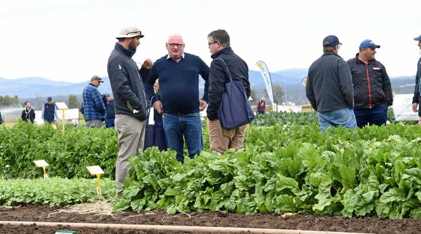 NOT HAPPENING: Plenty of fresh products were grown specifically for the Lockyer Growers Horticulture and Innovation Expo in 2016. A lack of water has forced this year's event to be cancelled.