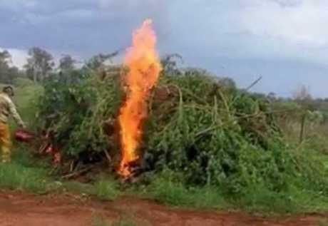 Footage of the cannabis burn at South Kolan.