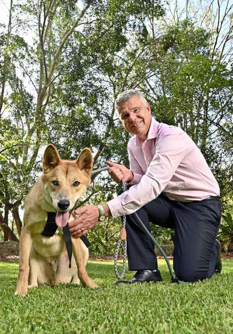 Ipswich City Council CEO David Farmer with Moose the dingo.