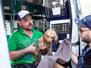 Outrage over 'gut-wrenching' animal rescue revelations
