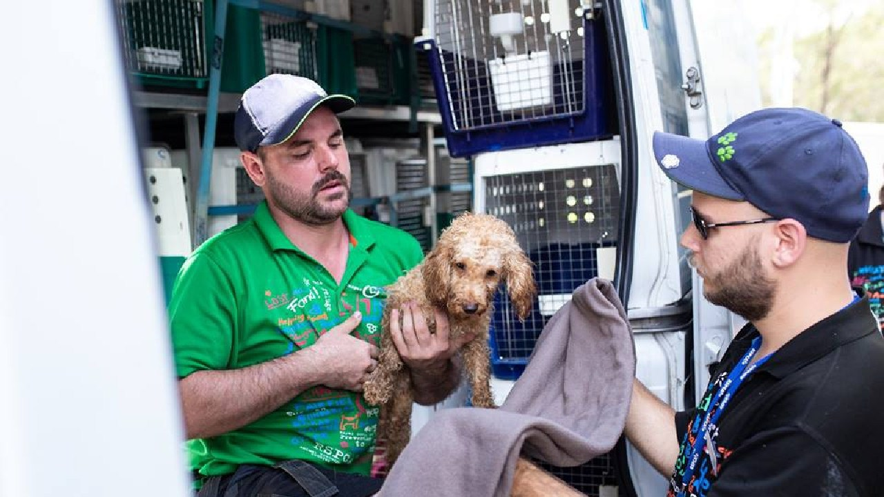 RSPCA staff take a dog into care during the raid on Storybook Farm. Picture: RSPCA