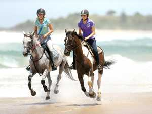 Cabarita horses galloping on the foreshore with
