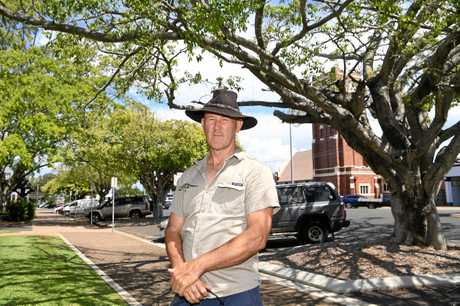 SAVE THE TREES: Landcare's Mike Johnson says the trees in Buss Park are suffering from a lack of water and nutrients in the ongoing drought.