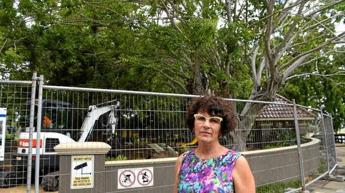 Could this be the end of Bundaberg's iconic fig trees?