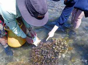 Funding boost for coral bleach education in Gladstone
