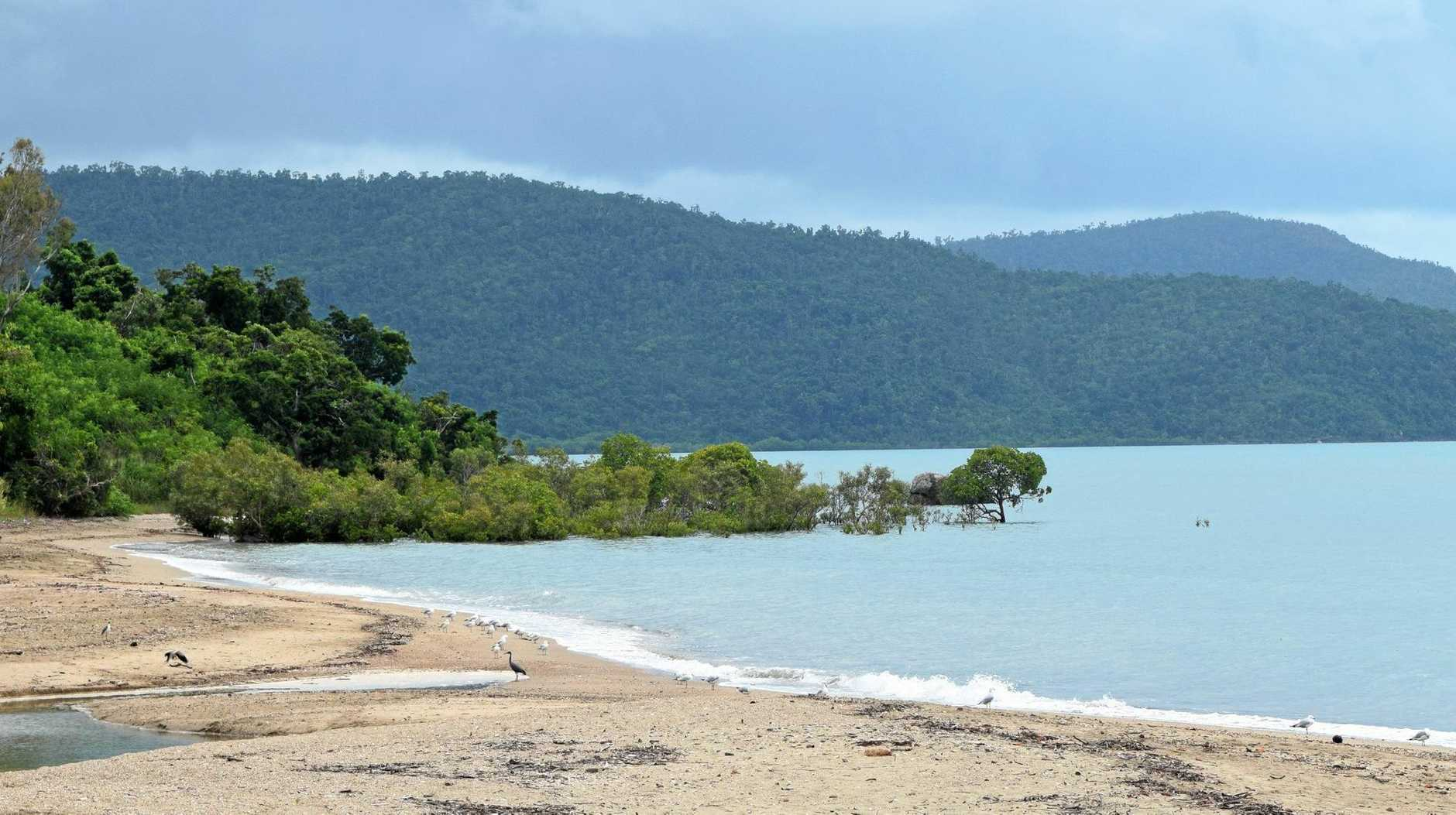 SIGHTING: A crocodile was spotted near these mangroves at Cannonvale Beach on Friday morning.
