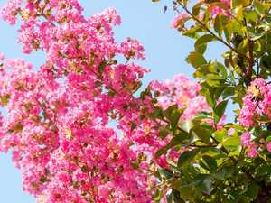 How to give your garden a bright touch