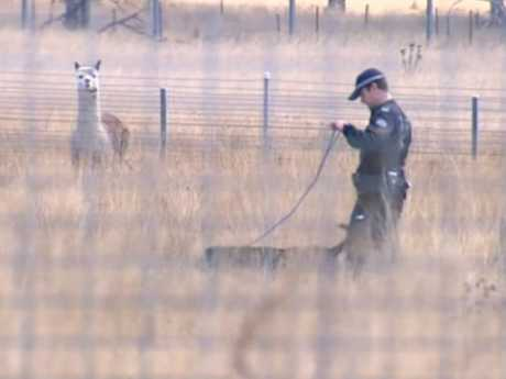 Police search the alpaca farm after reopening the cold case 1973 murder of Barbara McCulkin and her daughters. Picture: Nine