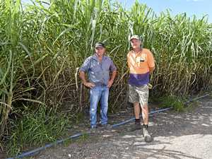 NOT CRIMINALS: Why new law will hurt canegrowers
