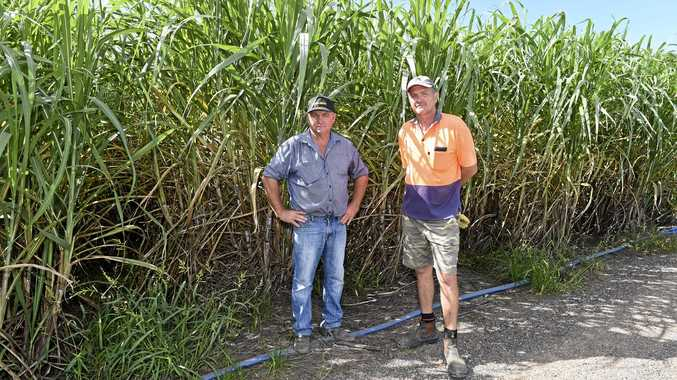 NOT CRIMINALS: Why new legislation will hurt M'boro canegrowers
