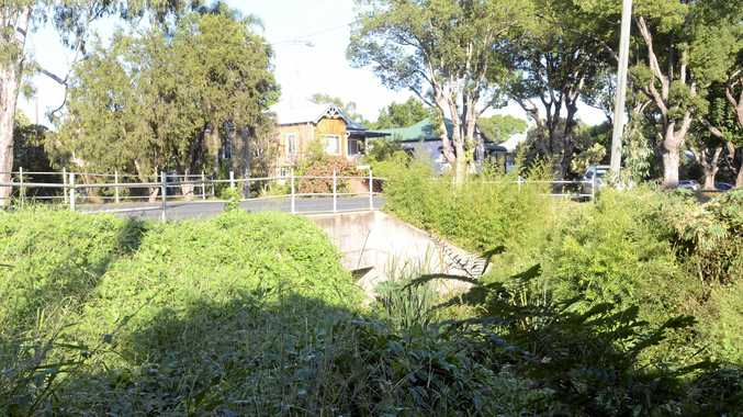 URBAN JUNGLE: The weeds around Christopher creek have been left to run wild.