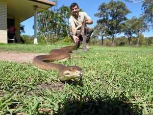 SNAKE GUIDE: Fraser Coast reptile wrangler releases ID book