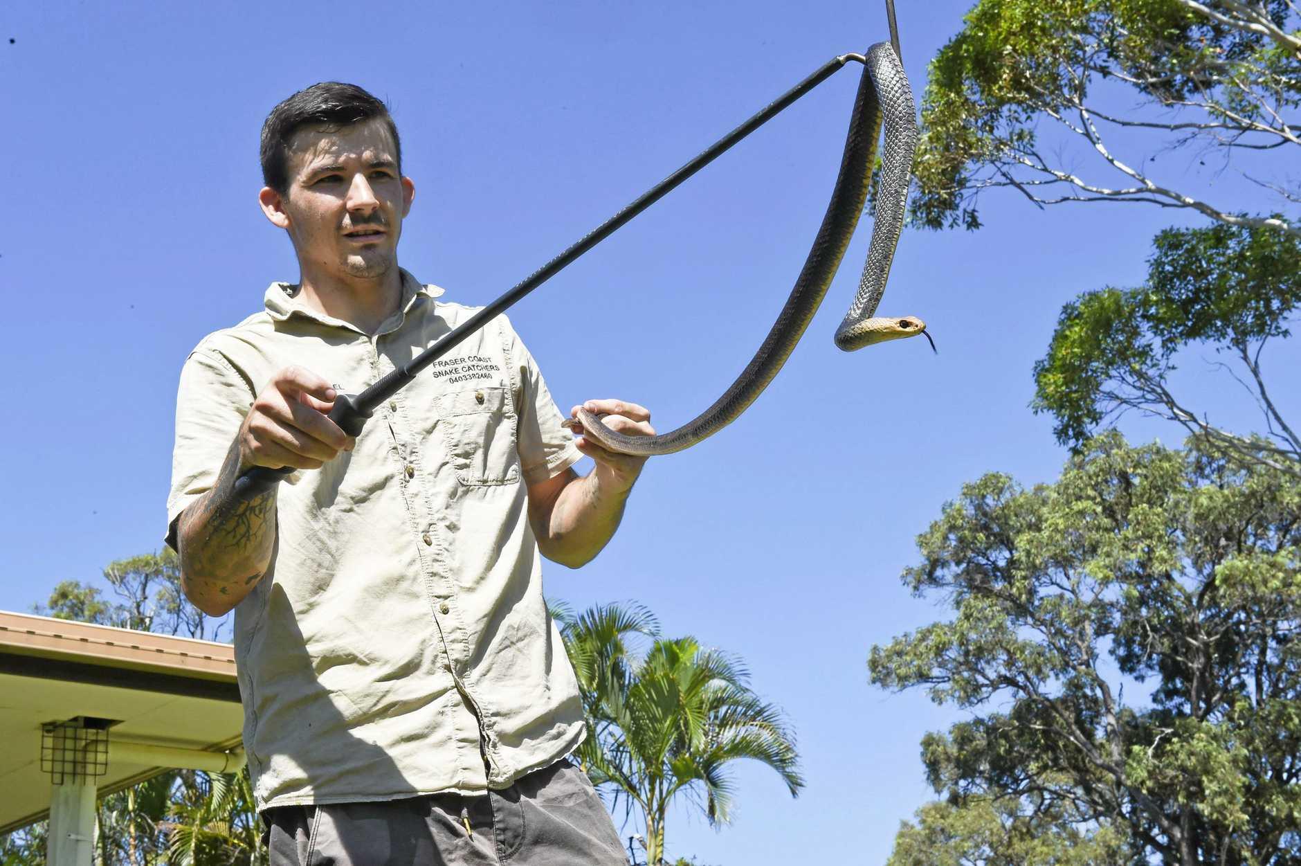 SLITHERY FRIEND: Fraser Coast snake catcher Samuel Hunt with an eastern brown snake.